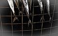 Fish tale (4191894014).jpg