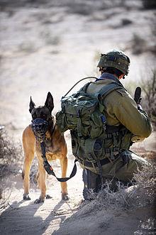 War Dogs  Has To Redo Vaginas