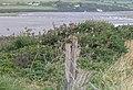 Flock of sparrows - geograph.org.uk - 531441.jpg