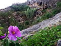 Flora y Fauna de Altepexi.jpg