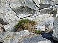 FloreAntarctique (5).jpg
