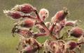 Flores da trilha do Mirante do Caim - Igatu 1.png
