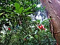 Flores salvajes.jpg