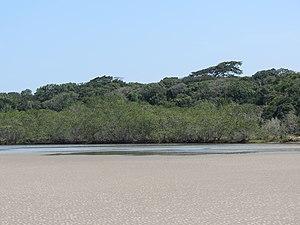 Restinga - Restinga habitat, São Paulo state.