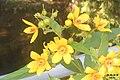 Flowers (32056844986).jpg
