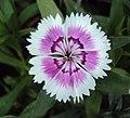 Flowers - Uncategorised Garden plants 152.JPG