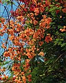 Flowers and colors from Brasil - panoramio.jpg