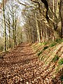 Footpath along Lindley Wood Reservoir - geograph.org.uk - 1058454.jpg