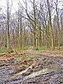 Footpath in Wyre Forest near B4194 road - geograph.org.uk - 674475.jpg
