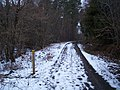 Footpath leading of an access track in Hemsted Forest - geograph.org.uk - 1713925.jpg