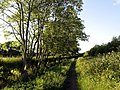 Footpath near Keyingham - geograph.org.uk - 857599.jpg
