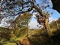 Footpath near Llanfihangel Nant Bran - geograph.org.uk - 1013438.jpg