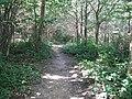 Footpath through Long Plantation near Tanyards - geograph.org.uk - 1434268.jpg