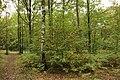 Forêt Départementale de Méridon à Chevreuse le 29 septembre 2017 - 46.jpg
