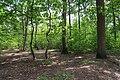 Forêt domaniale de Bois-d'Arcy 21.jpg