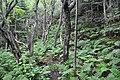 Forêt du versant nord de l'île aux Basques.jpg