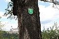 Forchtenstein - Naturdenkmal MA-015 - Speierling - Stamm mit Naturdenkmalschild.jpg