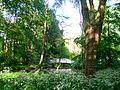 Forest scenery.JPG