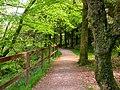 Forest walk near Dyemill - geograph.org.uk - 273400.jpg