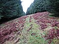 Forestry fire break - geograph.org.uk - 662414.jpg