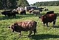 Forklandstripe - geograph.org.uk - 204593.jpg