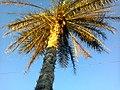 Foto0387 Coqueiro 2.jpg