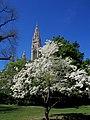 Frühling im Rathauspark - panoramio.jpg