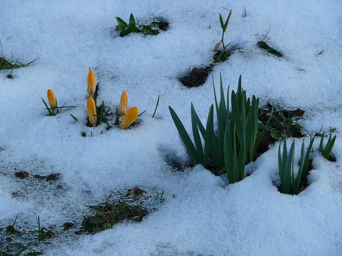 Spring Season Wikiquote