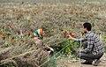 Fritillaria valley, Golestan Kuh, Khvansar County (13910224192019936).jpg