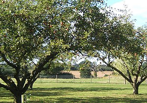 English: Fruit trees and lawn with fields beyond