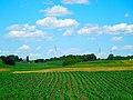 Galactic Wind Farm - panoramio (10).jpg