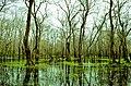 Galeriç Subasar Ormanı - panoramio (1).jpg