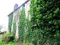 Galiax Mur de lierre.JPG