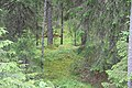 Gammelskog vid naturreservatet Eggarna.jpg
