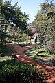 Garden - Agri-Horticultural Society of India - Alipore - Kolkata 2013-02-10 4800.JPG