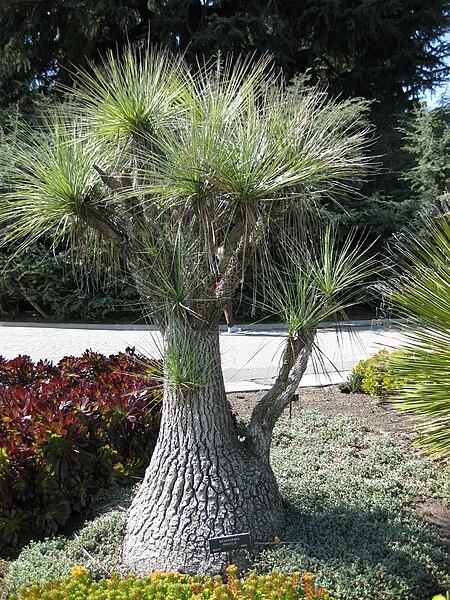 File:Gardenology-IMG 5135 hunt10mar.jpg