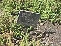 Gardenology.org-IMG 2154 hunt0903.jpg
