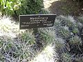 Gardenology.org-IMG 2161 hunt0903.jpg