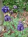 Gardenology.org-IMG 5203 hunt0904.jpg