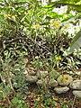 Gardenology.org-IMG 7510 hunt09jun.jpg