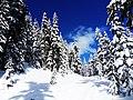 Garibaldi Provincial Park January 2009 (3).jpg
