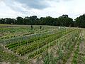 Gemüseselbsternte.jpg