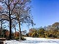 Georgia snow IMG 5470 (38082626065).jpg