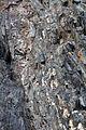 Gesteine am Ufer der Urft im Nationalpark Eifel-3523.jpg