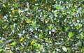 Glossy plant leaves.JPG