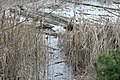 Gog-le-hi-te-wetlands 02-17 02.jpg
