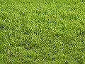 Grass 02221.JPG