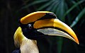 Great Indian Hornbill. Great Indian Hornbill. (10199049535).jpg