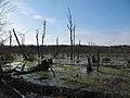 Great Marsh - panoramio.jpg