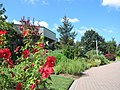 Green Spring Gardens in August (14897648536).jpg